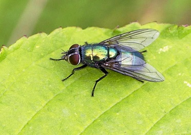 Flies Control & Fly Removal Services in London