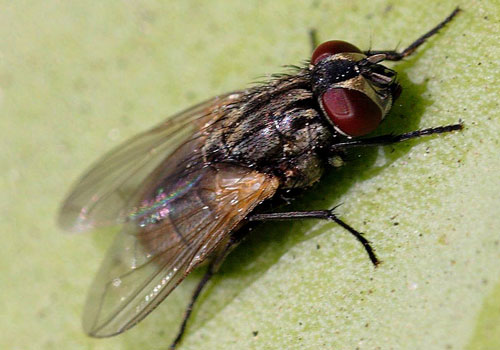 flies removal