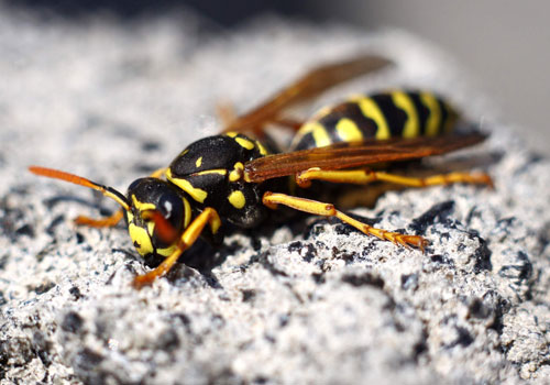 wasps removal service and nest london