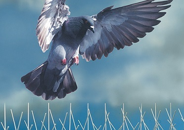 pigeon spikes pest control